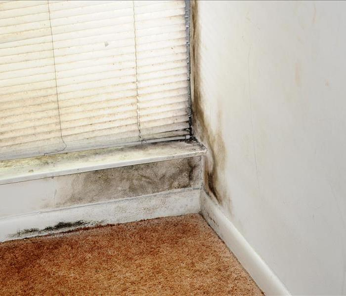 Mold Remediation Does your home have a mold problem?